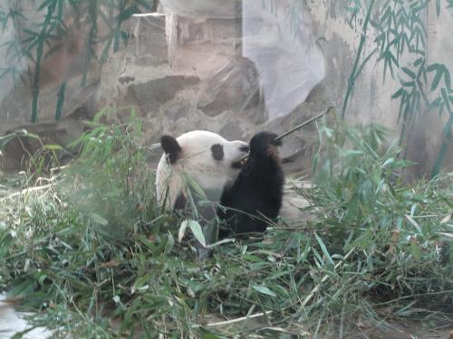 杭州動物園にて