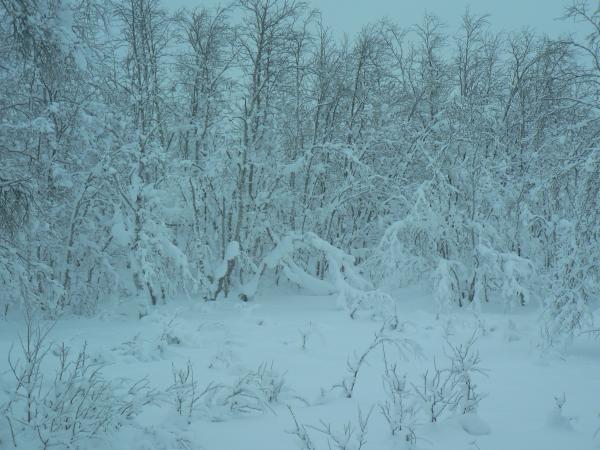 20120120_02_Kiruna