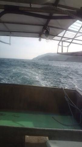 サヨリ曳き