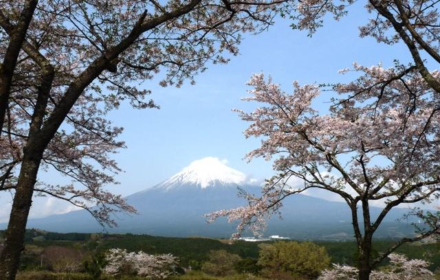 2010_4-11富士宮の桜 086