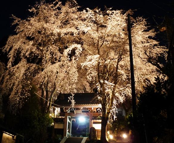 2010_3-30身延しだれ桜 050t
