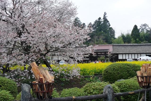 2010_4-8_11狩宿の桜 126