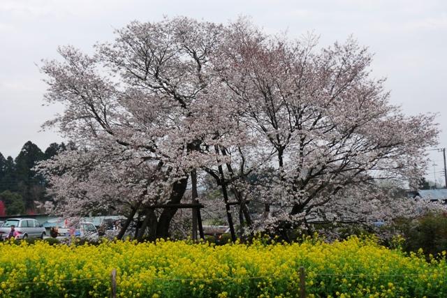2010_4-8_11狩宿の桜 119