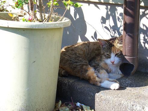 通りすがりに見かけた猫691