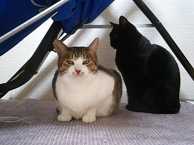 ムー♂&クーロン♀