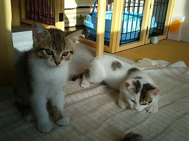 kyo&sei