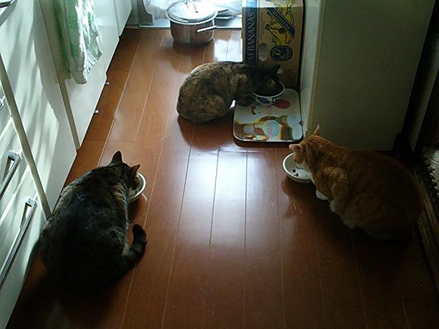 ピケ♂&タロ♂&クリン♀