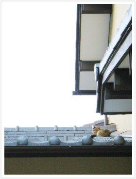 屋根の上で