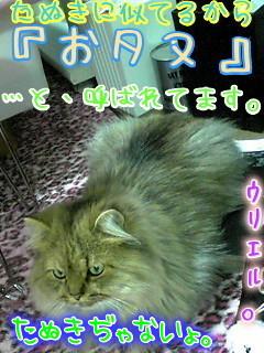 091203_2007001.jpg