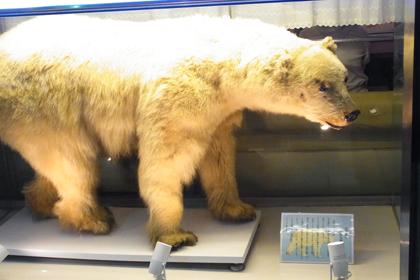 白熊の剥製?