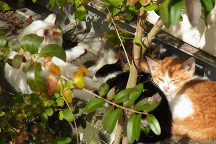 子猫の楽園
