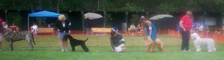 best puppy in show judging 6