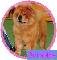 ScrabbleBOBa1.jpg