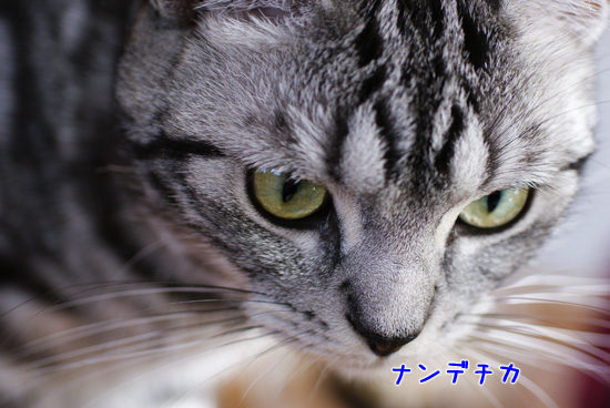 DSC08359-09.jpg