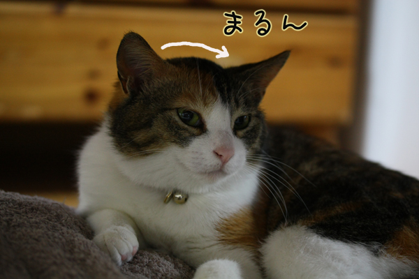 IMG_0981-05.jpg