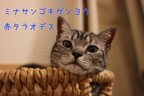 IMG_2889-1205.jpg