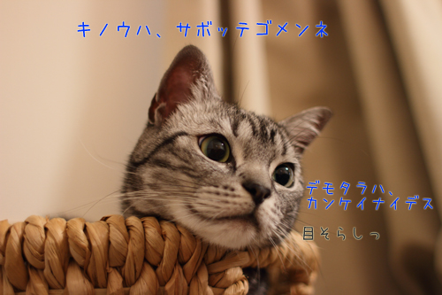 IMG_2892-1205.jpg