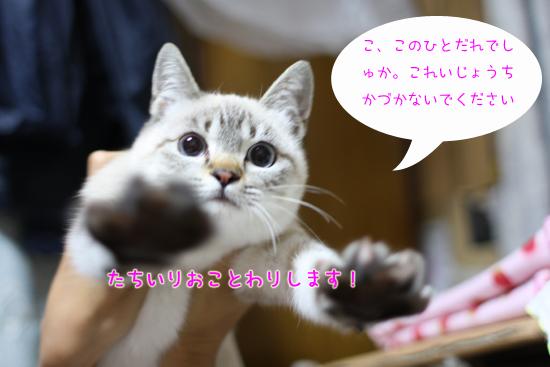 IMG_5299-13.jpg