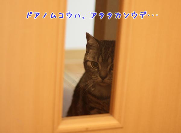 IMG_5700-15.jpg