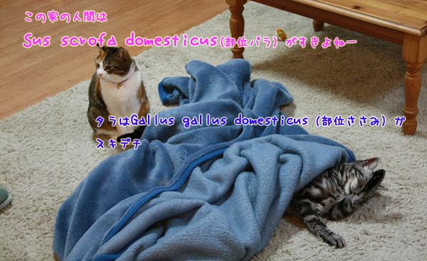 IMG_8435-27.jpg