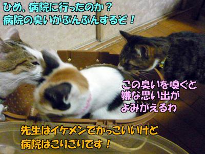 091129-03.jpg