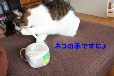 20091201 ネコの手ですにょのコピー