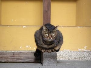神社猫さん2