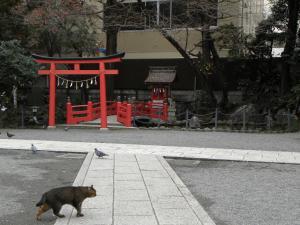 神社猫さん