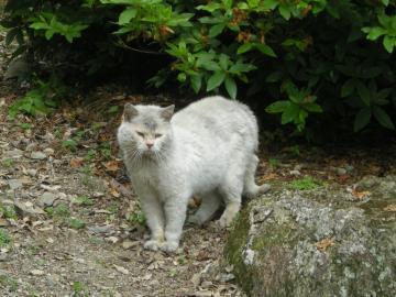 佐賀猫さん