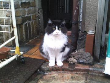 くり子_そっくり猫さん2