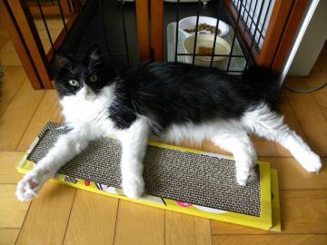 くり子_猫です
