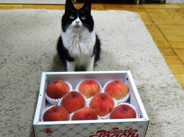 桃くり子2