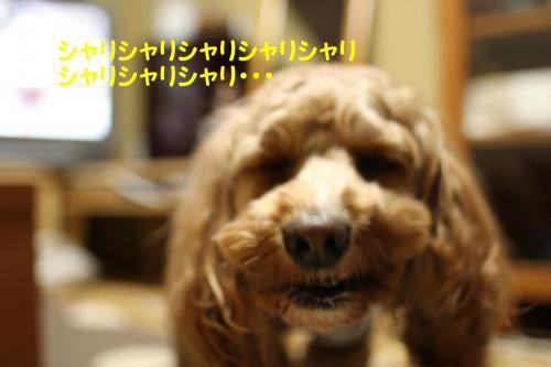 IMG_6928-1_convert_20091216222545.jpg