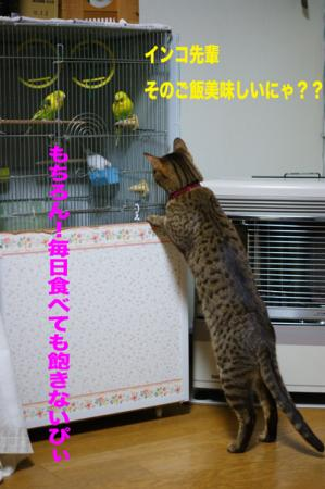 2_20091229001716.jpg