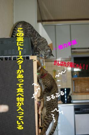 7_20091229001755.jpg