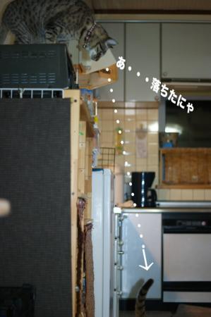 8_20091229001755.jpg