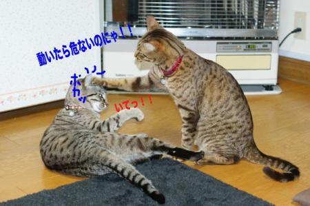 9_20091229001756.jpg