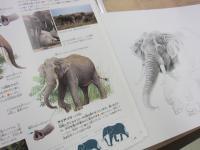 ゾウを描きました