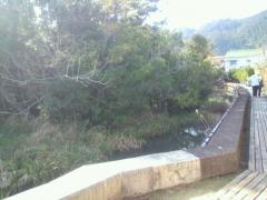 浮島の森5