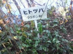 浮島の森9