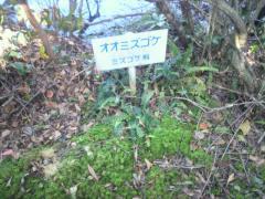 浮島の森8