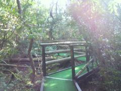 浮島の森6