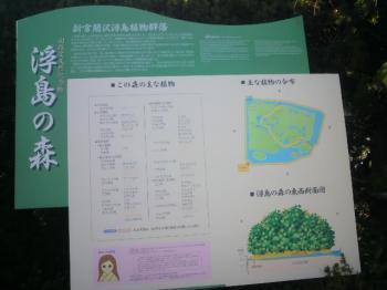 浮島の森2