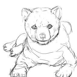 模写_柴犬