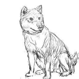 模写_四国犬