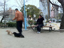 130317_dog_blog.jpg