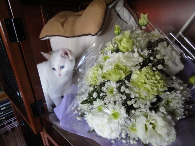 お花とにゃこ