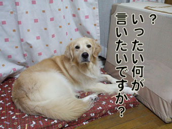 2009_08050028_20100520130019.jpg
