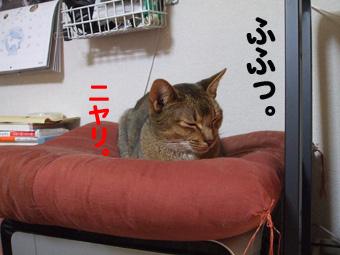 2009_02150003のコピー