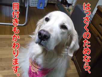 2010_03130052.jpg